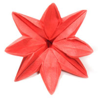 Eight petals flower