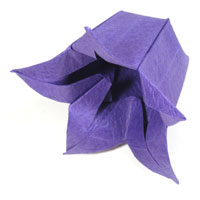 paper bellflower