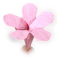 How to make origami flower origami phlox mightylinksfo Images